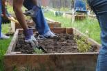 Garden Volunteers Warren Lane SJLI - The Duo Dishes